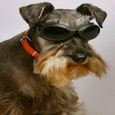 Click here to view more of Blind-Dogs music!
