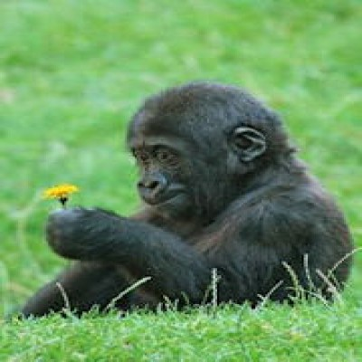 Click here to view more of Gorillas music!